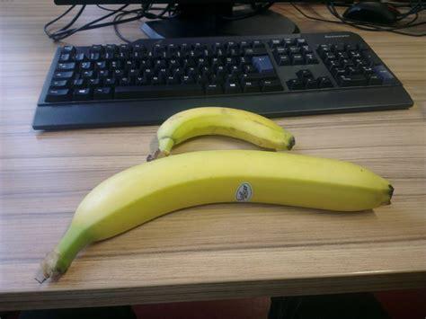 a tiny banana imgur 17 best banana for scale images on pinterest bananas