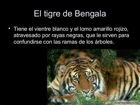 el tigre y el le 243 n pueden ser los m 225 s fuertes pero el biolog 237 a 6 animales mam 237 feros