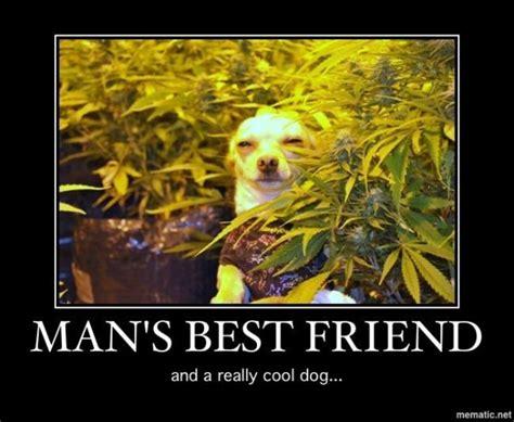 Best Weed Memes - man s best friend weed memes