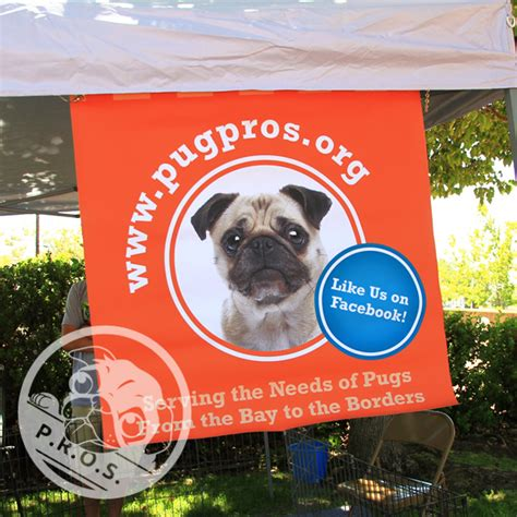 pug rescue of sacramento about pros pug rescue of sacramento