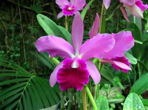 imagenes flores orquideas fotos de flores orquideas