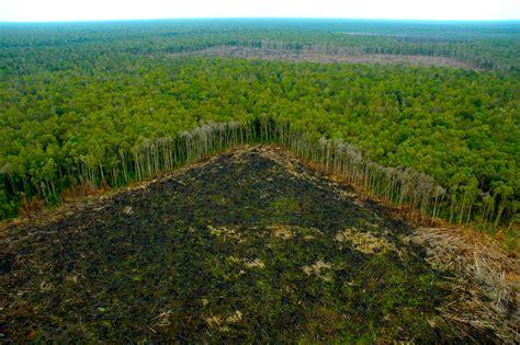 Hängesessel Amazonas by Deforestaci 243 N Indiscriminada En Tamshiyacu Amazonas Aidesep
