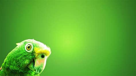 imagenes verdes hd periquito verde 1920x1080 hd fondoswiki com
