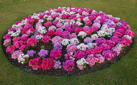 how to develop color how to develop flower garden color schemes flower bed