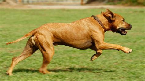 test sul quoziente intellettivo la ricerca anche ai cani si pu 242 misurare il quoziente