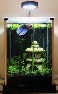 1000  ideas about Betta Tank on Pinterest   Betta, Aquascaping and