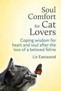 how to comfort a cat pet loss grief on pinterest pet grief losing a pet and