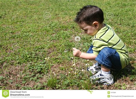 The Backyard Boys by Boy Picking Dandelions From The Yard Stock Images Image