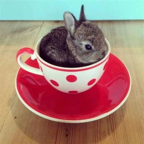Kaos Bunny And Cup Of Tea teacup bunny cuteness
