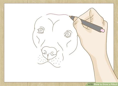 how to a pitbull how to draw a pitbull with pictures wikihow