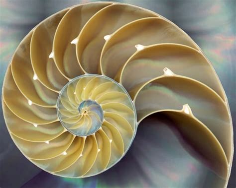 patterns in nature documentary the fibonacci agenda revolution of the mind