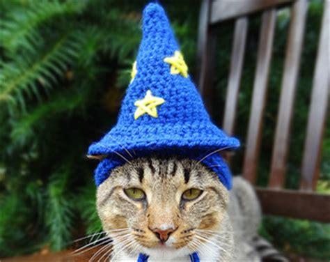 wizard cat overview for dextritah
