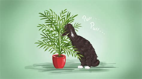 Houseplants That Don T Need Light by The Best Low Maintenance Pet Friendly Houseplants
