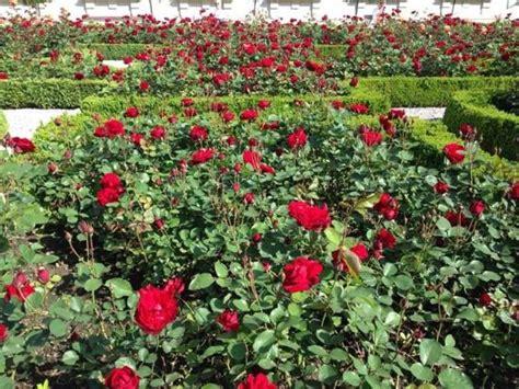 Bunga Taman Merah Istana Dan Taman Mirabell Salzburg Austria Picture Of
