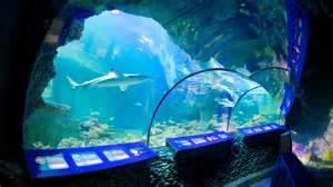 sea aquarium munich attraction expedia au