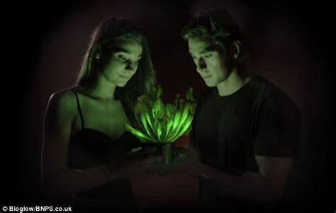 glow in the plants a bright idea genetically engineered plant glows so