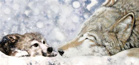 wolf s wolf s rain by zhaot on deviantart