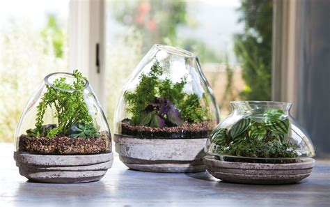 evergreen enterprises bring  garden