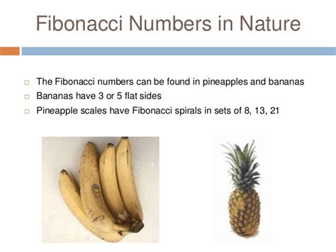 number pattern found in nature maths in everyday life