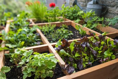 pros  cons  square foot gardening