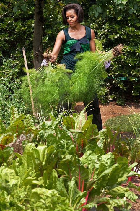 white house vegetable garden a look back at obama s vegetable garden the