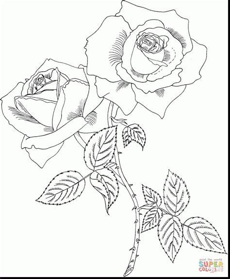 rose bush coloring page rose bush coloring download rose bush coloring