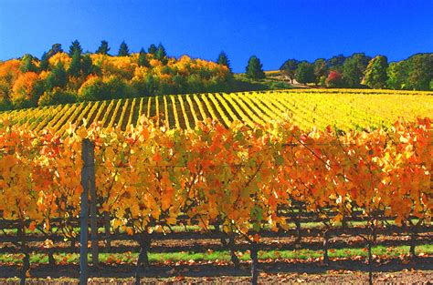 oregon wine country by margaret hood