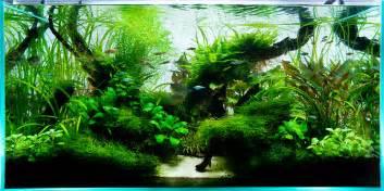 90cm ada aquascape live planted