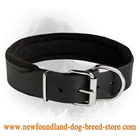 Leather Collar With Hello 20 Mm X 45 Cm newfoundland durable padded leather collar 40 mm c24 1032 padded leather collar 40 mm
