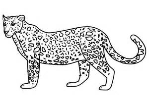 leopard color pictures to colour leopards