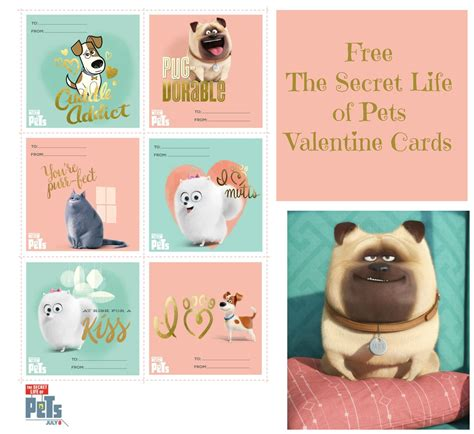 secret of day the secret of pets s day cards as they