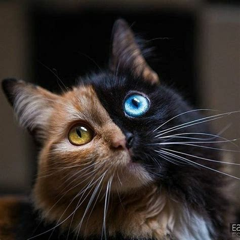 when do kittens change color best 25 pretty cats ideas that you will like on