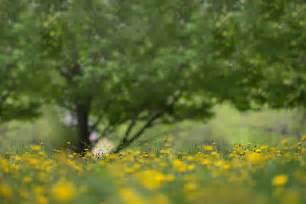 background photography digital backgrounds patty photography