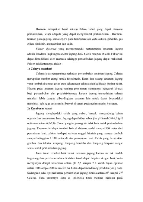 Bibit Jagung Dk 95 laporan produksi tanaman jagung