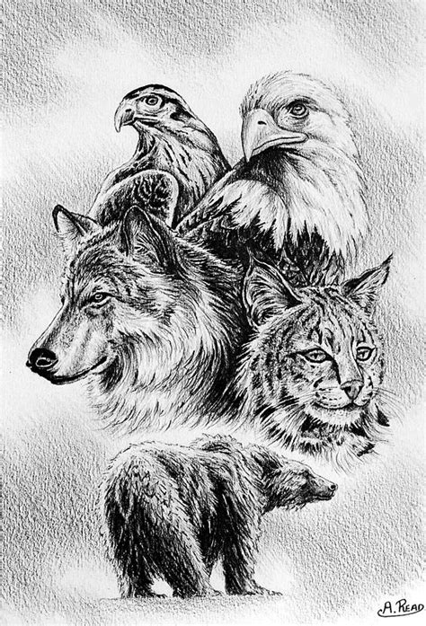 the wildlife collection 1 drawing by andrew read