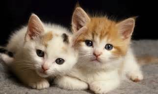 Cat pictures funny cute adorable and all time favorite cat