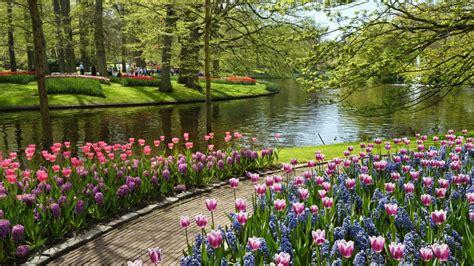 gambar pemandangan taman bunga gambar pemandangan