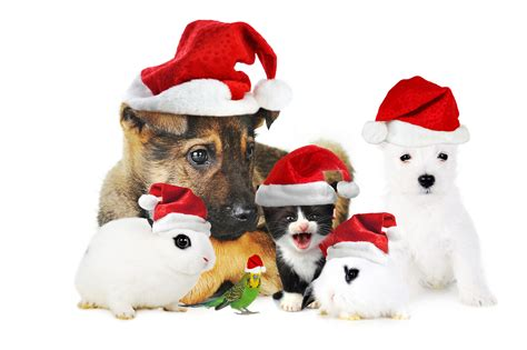 christmas animals animated animated hats clipart clipart suggest