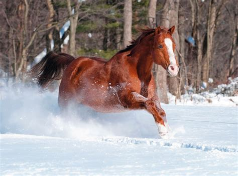 free printable christmas cards with horses horses in need will you give the christmas gift that