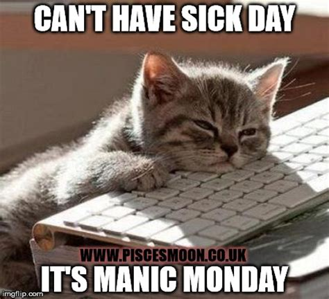 Sick Cat Meme - manic monday sick day imgflip