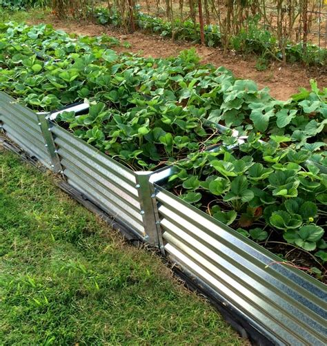 galvanized steel garden beds 17 best images about metal garden beds on pinterest