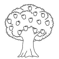 25 tree coloring pages