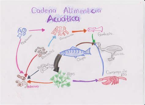 cadena alimenticia acuatica y terrestre wikipedia proyecto de aula de biologia jass