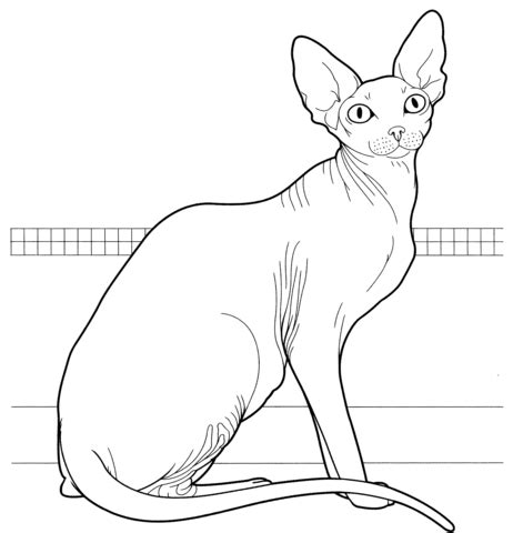 sphynx cat coloring page 301 moved permanently