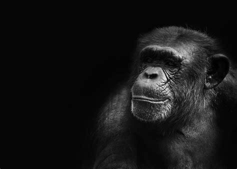 kumpulan gambar monyet  beragam