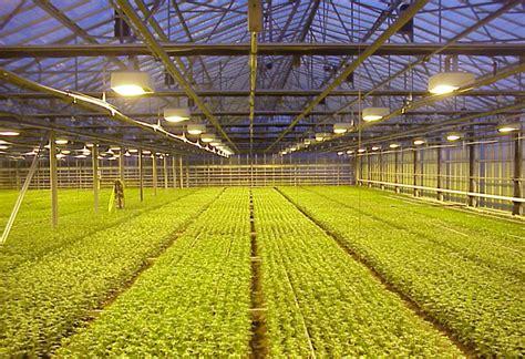 illuminazione serre illuminazione a led serre agricole ecopro energia