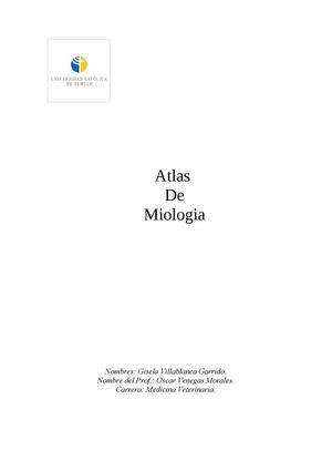Calaméo - atlas de miologia