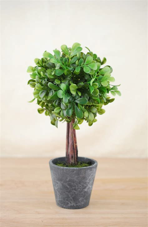 boxwood topiary save on crafts topiary