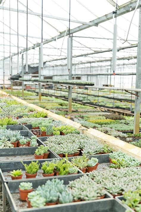 greenhouses in florida hearts orlando florida cactus inc succulent farm