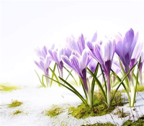image of spring flowers stock photo of spring flowers 03 hd picture free stock